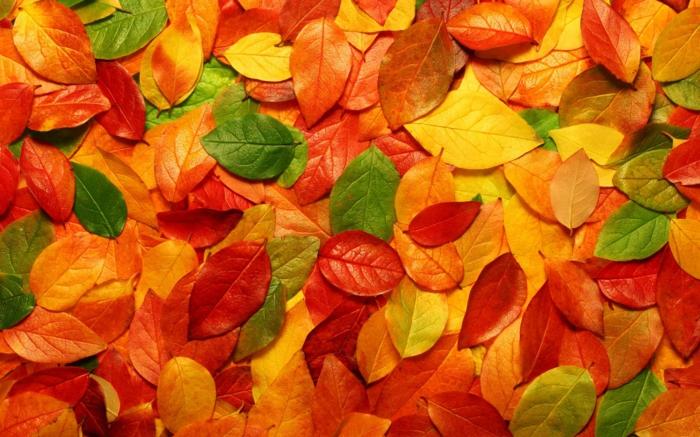 images d'automne pour fond d'écran, feuilles tombées en automne