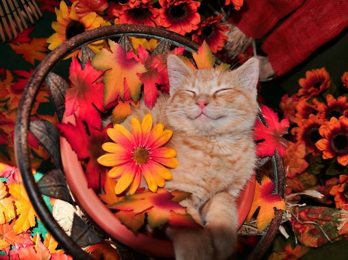 images d'automne pour fond d'écran, chat mignon et fleurs, image d'automne