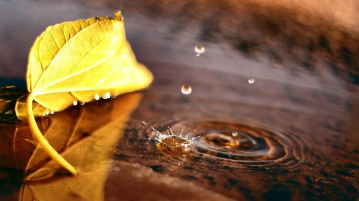 images d'automne pour fond d'écran, macro photo pour fond d'écran
