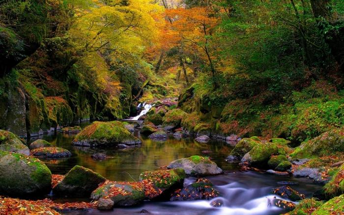 images d'automne pour fond d'écran, joli paysage de forêt et de fleuve
