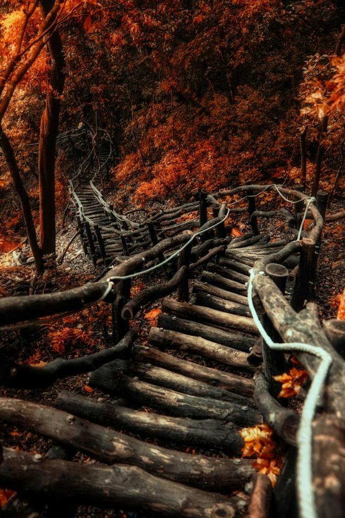 paysage automne, un pont en buches menant vers la forêt, paysage de la fin d'été