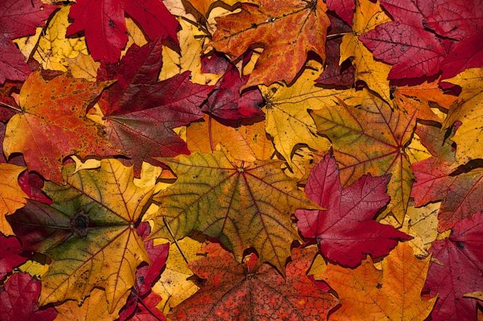 paysage automne, composition de feuilles jaunes et rouges, inspiration pour photographes