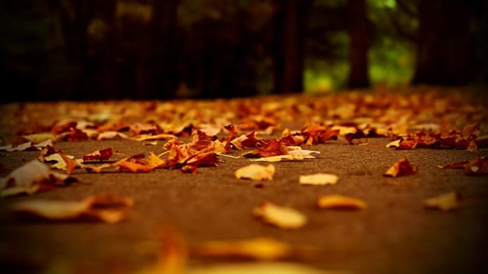 paysage automne, feuilles sur l'allée dans le parc, paysages d'automne