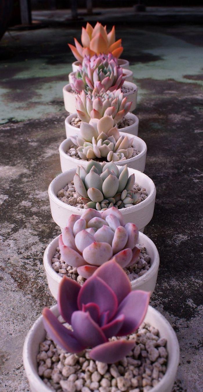 comment intégrer les succulentes dans la déco de jardin, petites plantes grasses dans pot à fleur gris