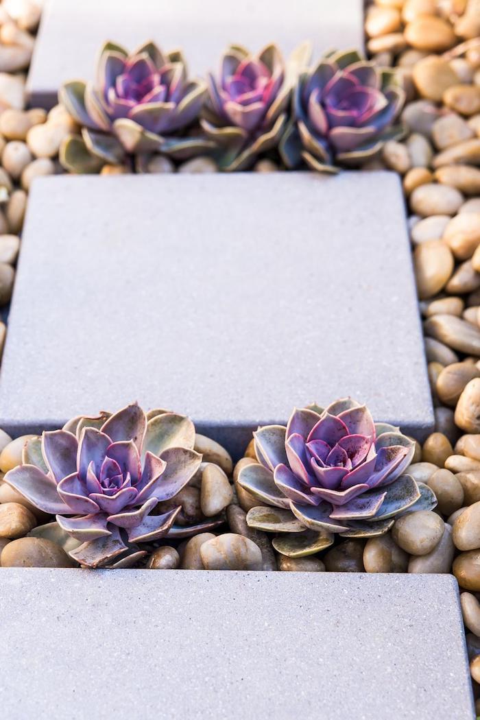 déco de jardin avec sentier en dalles de béton et galets décoratifs, petites plantes violettes
