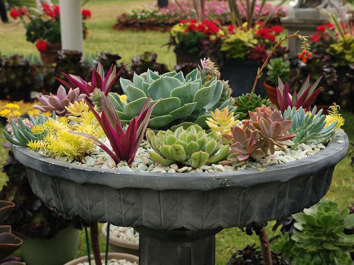 plantes grasses, créer une fontaine zen avec galets et plantes succulentes, décoration de jardin avec cailloux