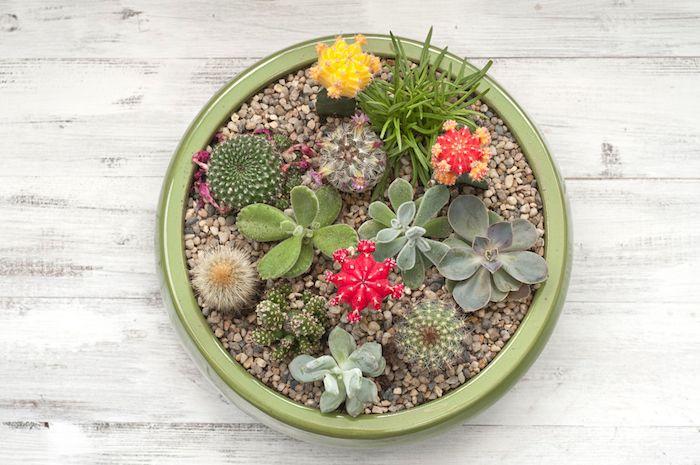 plantes grasses, projet diy jardinage avec cailloux et cactus rouges, déco jardin avec pot à fleurs vert