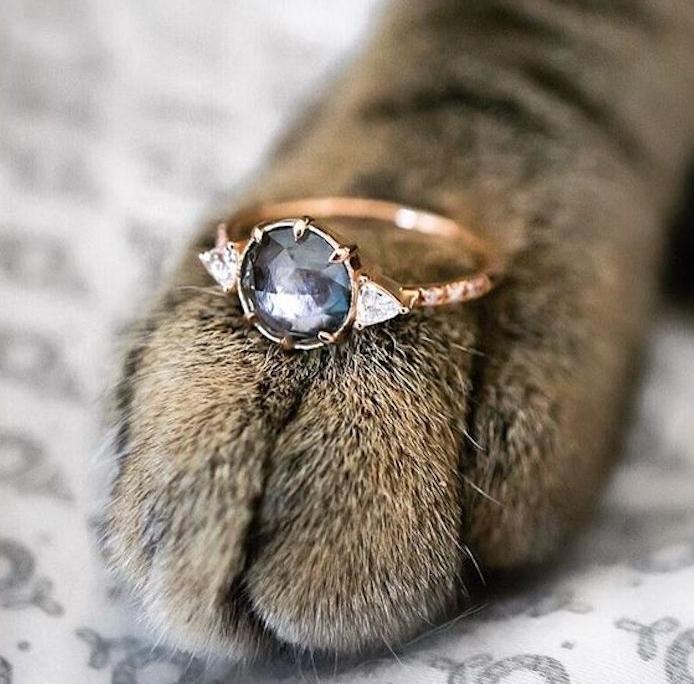 une bague de fiancaille sur la patte de votre chat, idée de demande en mariage insolite et très originale