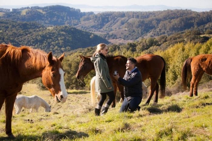 demande en fiancaille surprise au cours d une randonnée à la montagne, jolis chevaux sauvages