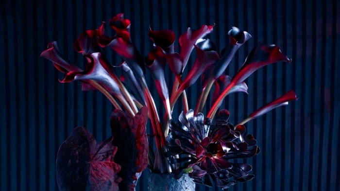 soirée halloween, idée quelles plantes choisir pour une décoration Halloween en noir et rouge