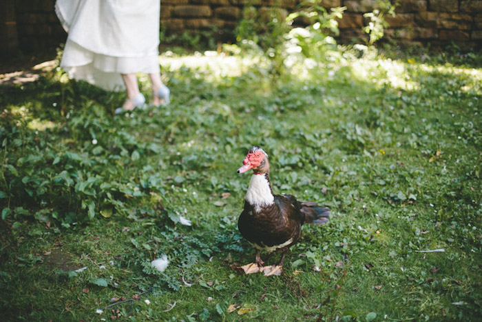 un invité mariage canard sur un gazon vert, idée comment créer une decoration mariage champetre