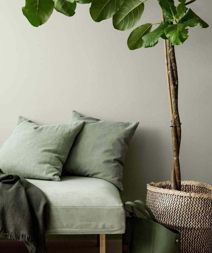 chaise longue et coussins décoratifs céladon couleur sur un fond gris en peinture murale, plande verte dans un panier marron, couverture gris anthracite