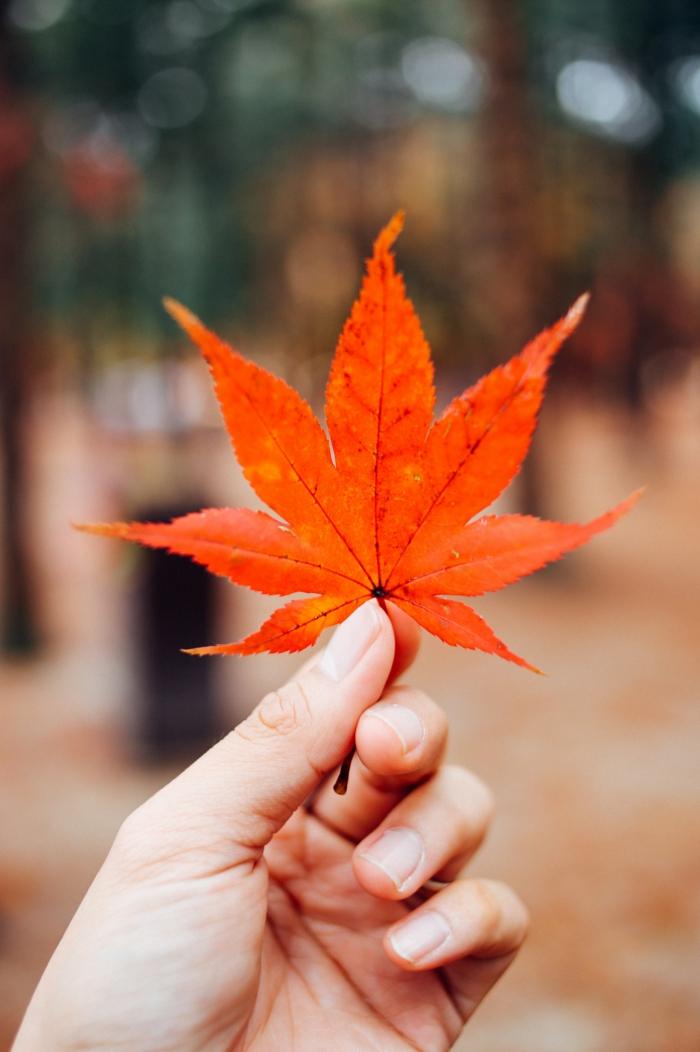 Formidable idée fond d écran hd iphone fond d écran accueil iphone feuille d automne image fond d ecran automne orange feuille d arbre