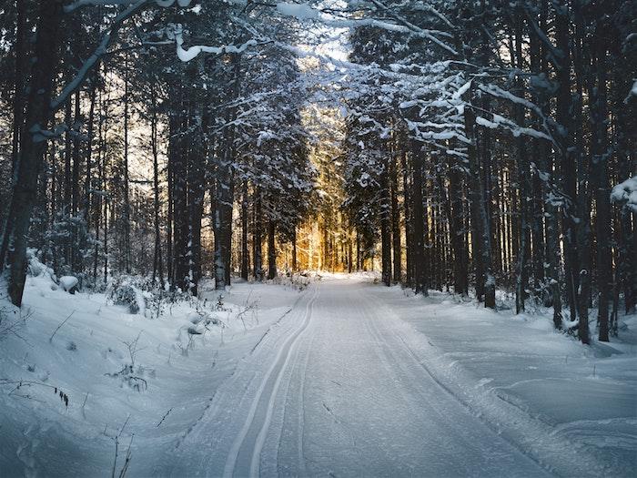 fond d écran hiver, chemin enneigé dans une foret, lumière au fond, paysage montagne