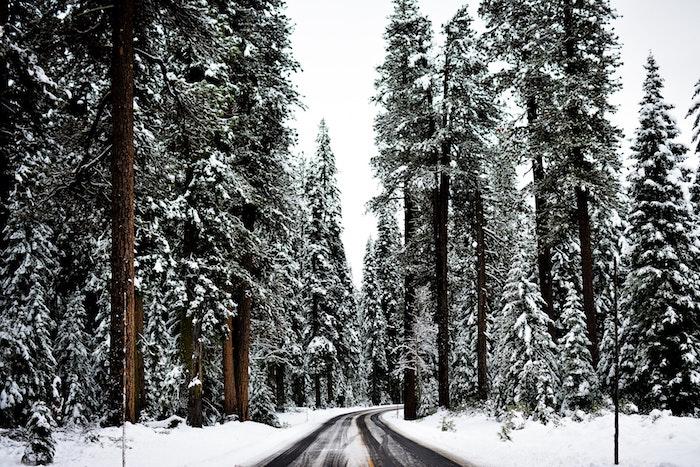 images de noël gratuites, chemin dans une forêt enneigée de conifères, idée de paysage hiver fond ecran