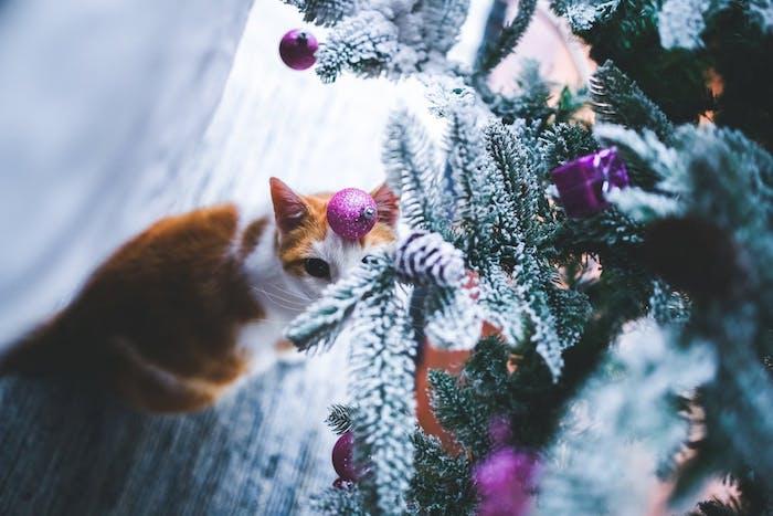 fond d'écran noël avec chat et sapin de noel neige artificiel et boules de noel et ornements couleur mauve