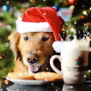 Fond d'écran Noël - plus de 100 images sublimes pour commencer le compte à rebours