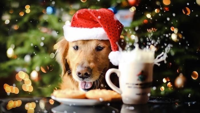 carte de noel gratuite, fond ecran noel avec chien mignon au chapeau de pere noel en rouge et blanc, tasse de lait, fond en sapins de noël illuminés de guirlandes lumineuses