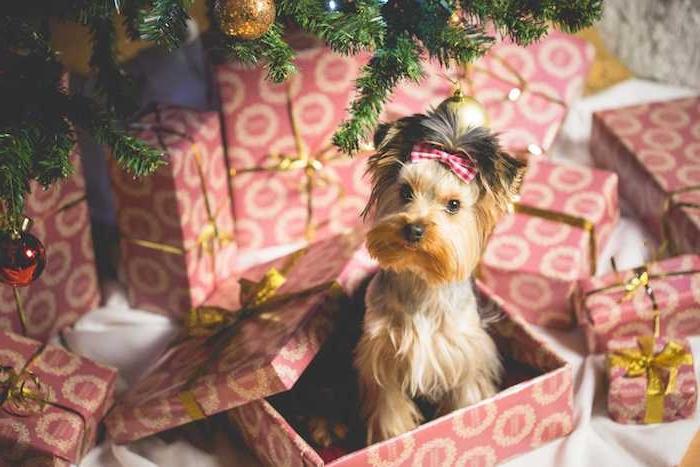 chiot mignon dans une boite cadeau rouge sous sapin de noel décoré, fond d écran noël simple