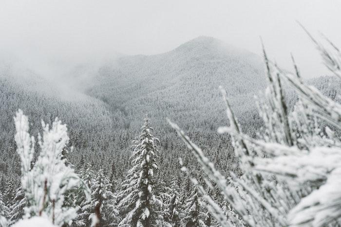 fond d écran paysage hiver, montage enneigée, forêt de conifères, sapins et pins, paysage feerique