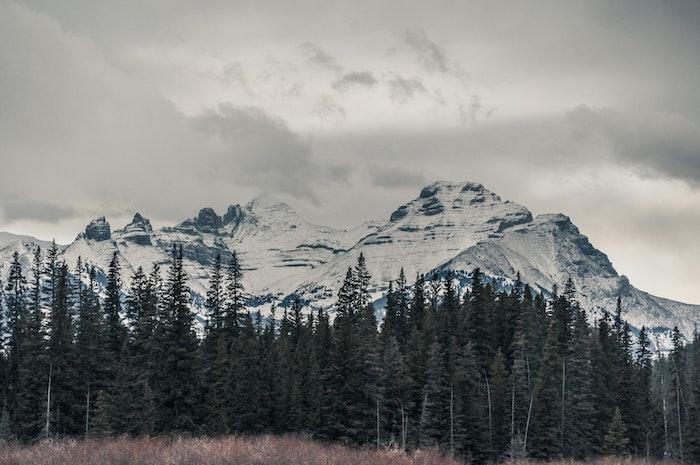 paysage hiver fond ecran, montagne enneigée sur le fond, une forêt de sapins verts, décor en neige