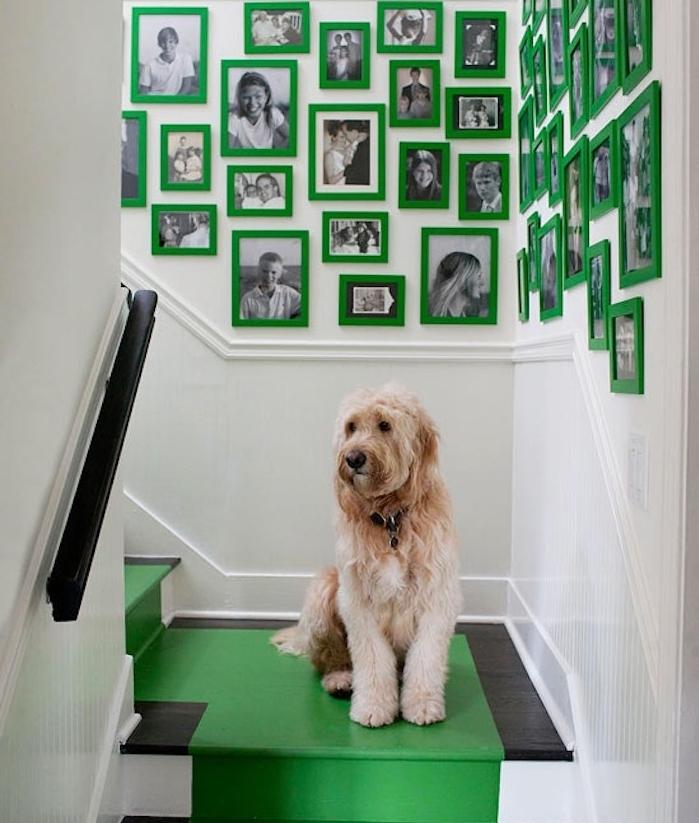 déco montée d escalier en cadres vertes avec des photos de famille en noir et blanc sur un mur blanc, tapis de peintire jaune sur un escalier noir et blanc, chien mignon