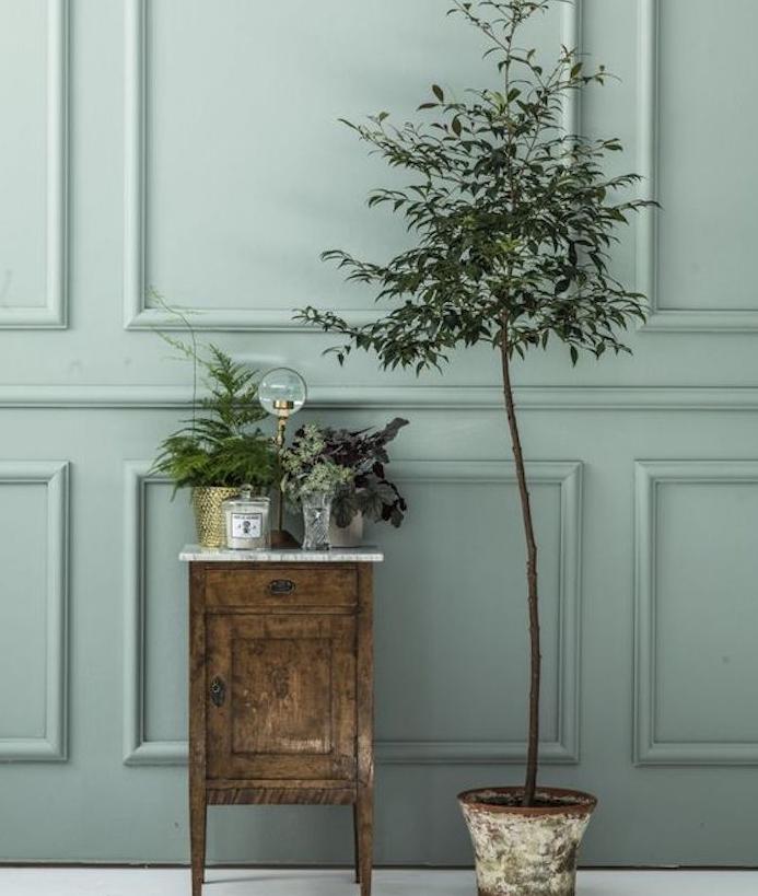deco mur vert gris vintage avec meuble en bois usé, défraichi, plantes vertes, sol blanc, ambiance retro chic