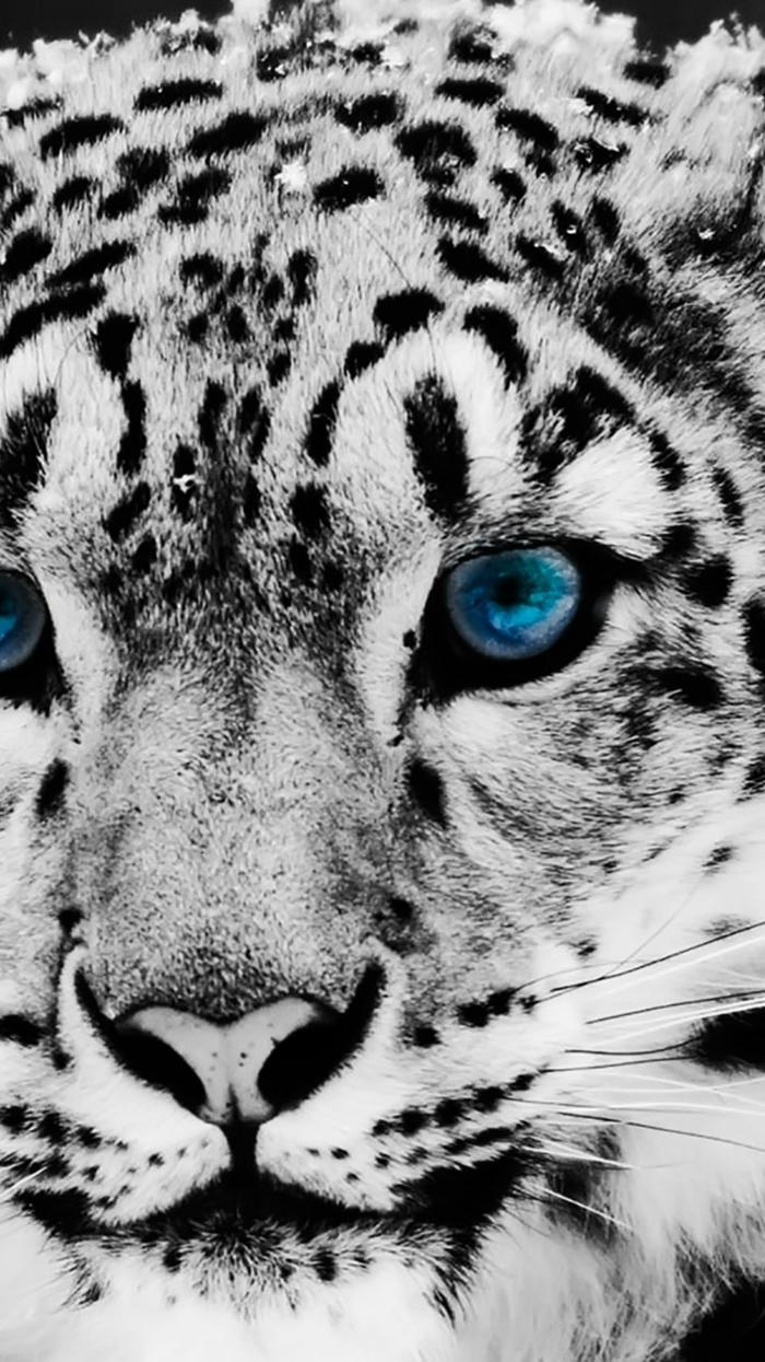 Photo de fond d écran iphone fond d écran noir iphone cool image beau léopard