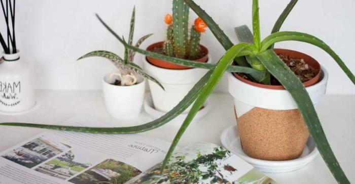 Activité manuelle avec bouchon liege idée déco chambre pot de plante vert cactus photo déco de bureau organisation