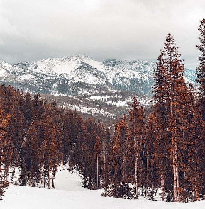 paysage enneigé dans une forêt de conifères en feuilles marron avec un fond de montagnes enneigées, fond ecran noel