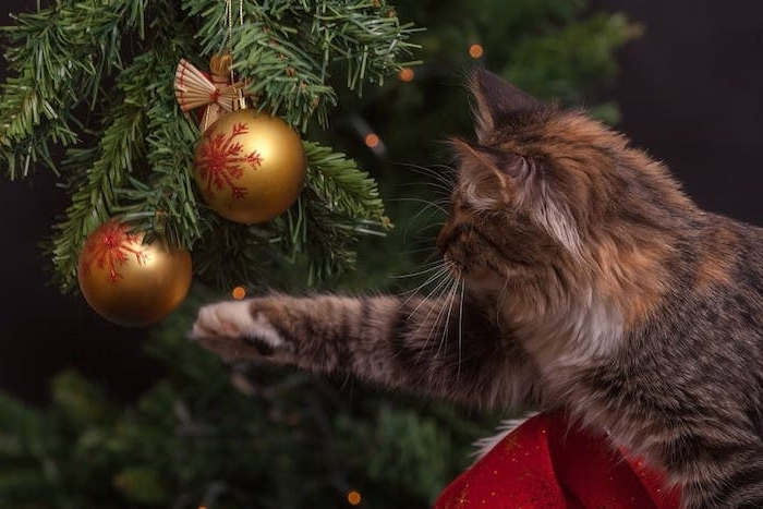 exemple de wallpaper noel en sapin de noel vert décoré de boules de noel dorées et chat qui joue avec
