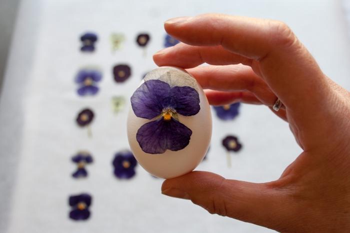 une activité manuelle printemps sur thème décoration des oeufs de pâques avec des fleurs pressées