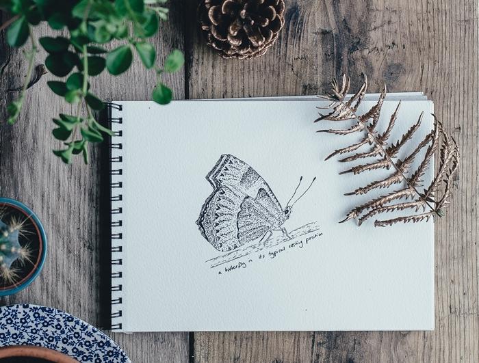 apprendre a dessiner en noir et blanc crayon activite creative dessin papier blanc feuille dessin papillon realiste