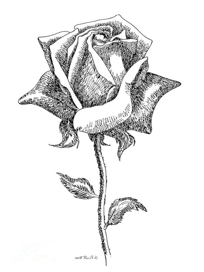 dessin rose noir et blanc dessiner fleur noir et blanc dessin ombres noir et blanc idée dessin à faire soi même