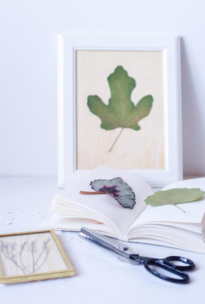 cadre vegetal original composée d'une seuile feuille séchée pour afficher sa collection de feuilles d'arbres