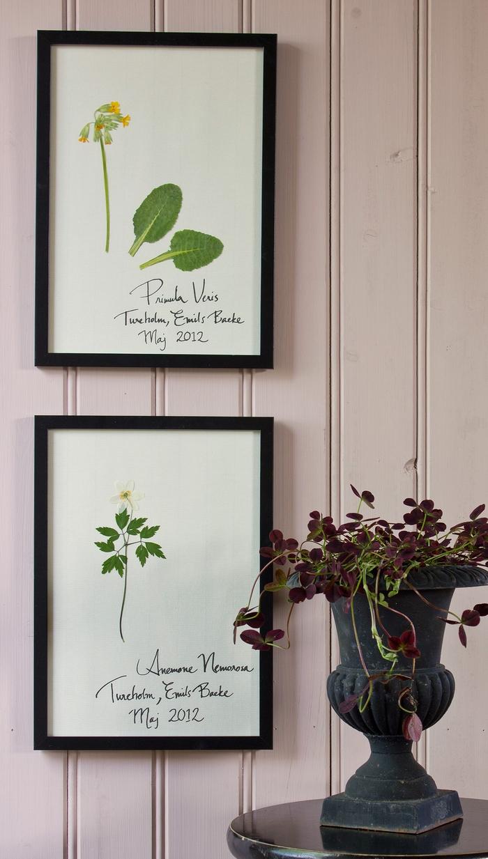 un herbier cadre deco au look vintage authentique grâce au nom des échantillons, le lieu et la date de la collecte