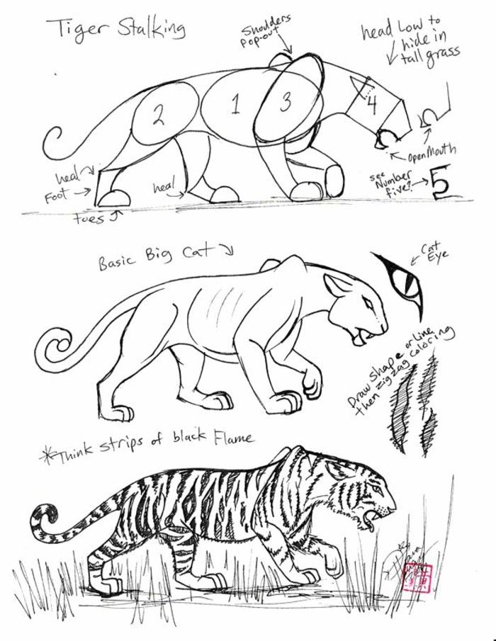 Jolis dessins en noir et blanc à imprimer décoration maison art comment dessiner un tigre scheme