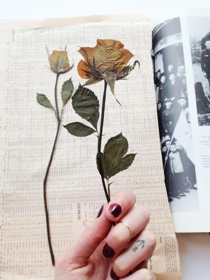tuto pour réaliser un cadre herbier vintage à design botanique avec des plantes pressées encadrées, jolie rose séchée à encadrer pour une jolie déco murale vintage à inspiration nature
