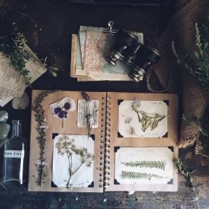 Comment faire un herbier? Mille idées pour le botaniste amateur créatif
