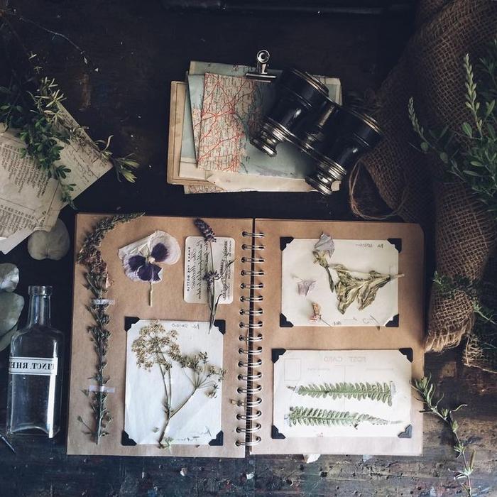 une activité manuelle sur la flore et la composition florale de fleurs pressées, un carnet de voyage inspiré de la nature et des plantes