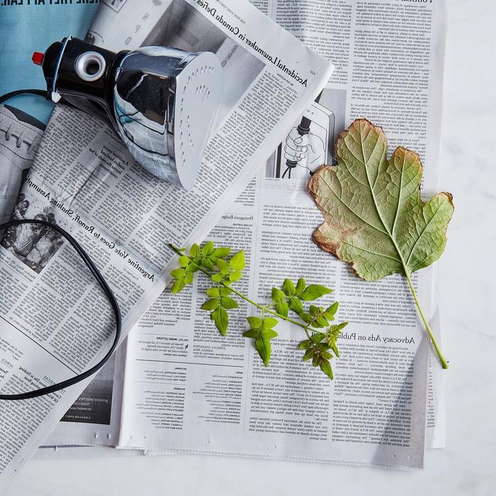 technique de pressage des feuilles avec fer à repasser pour faire un herbier en peu de temps
