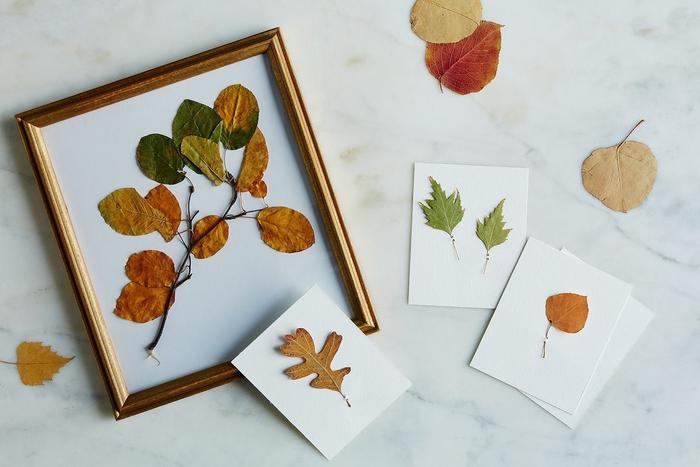 idée pour une déco inspirée des collections botaniques vintage avec un cadre vegetal de feuilles d'automnes séchées