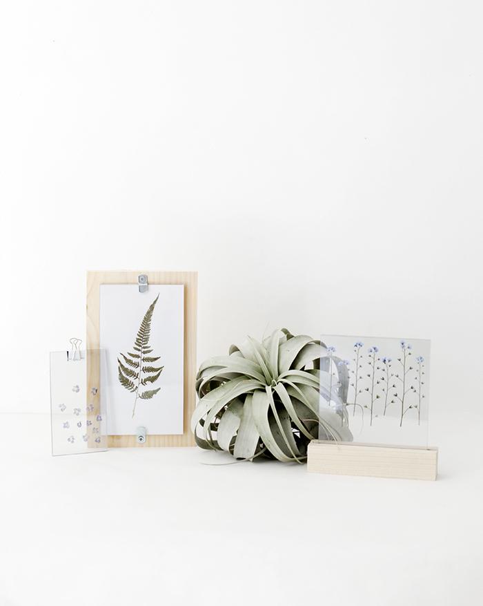 réaliser un cadre vegetal original en bois, verre et plantes pressées pour une déco à inspiration botanique