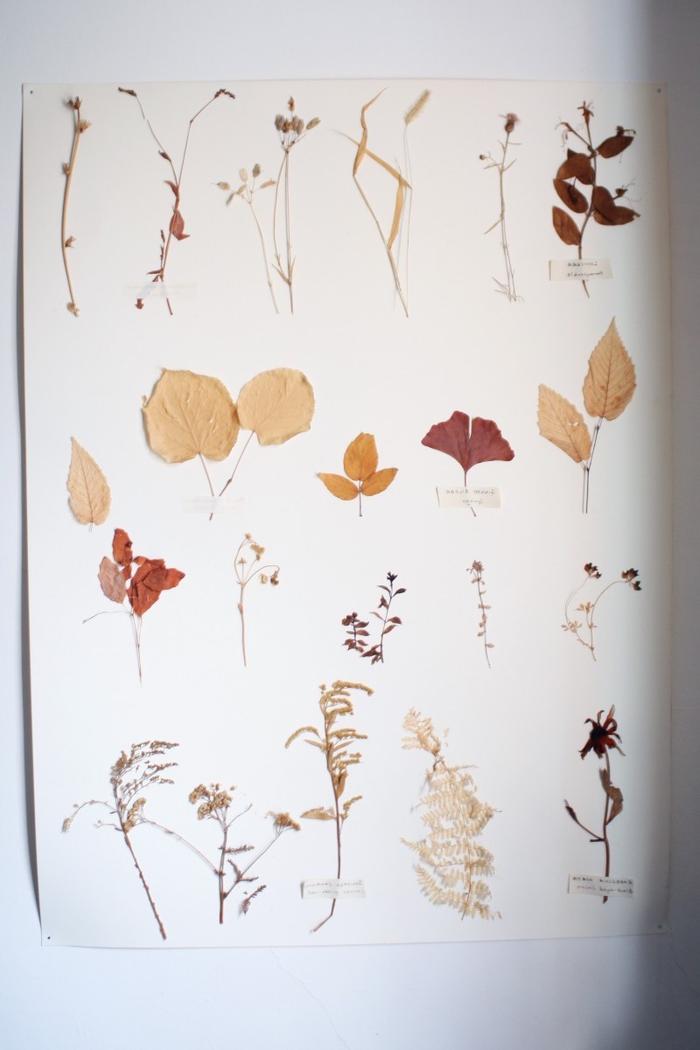 comment faire un herbier, bricolage sur thème nature pour faire un herbier vintage inspirée des études botaniques et la flore
