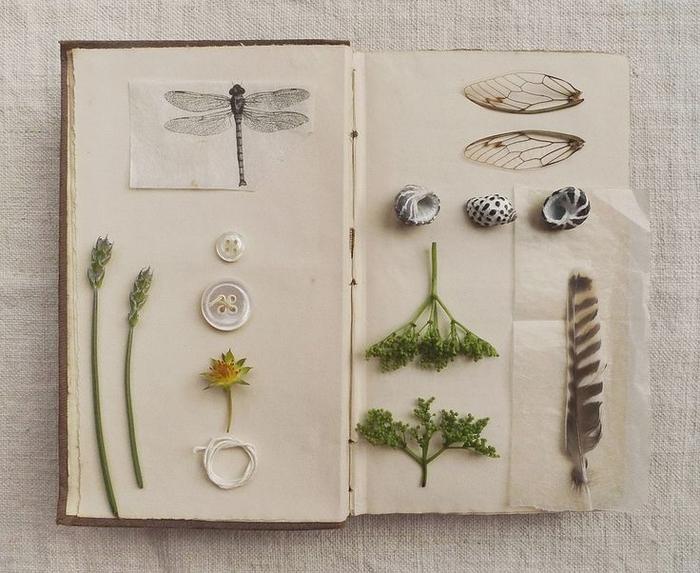 une idée activité manuelle scrapbooking original sur thème nature avec des plantes séchées, des plumes, des coquillages et des dessins d'insectes