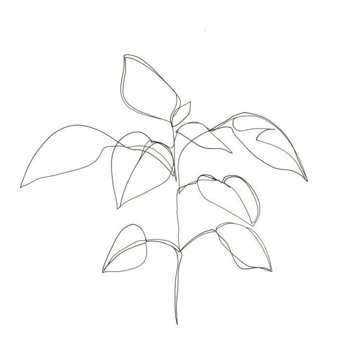 Dessin noir et blanc comment dessiner en noir et blanc style plante un ligne