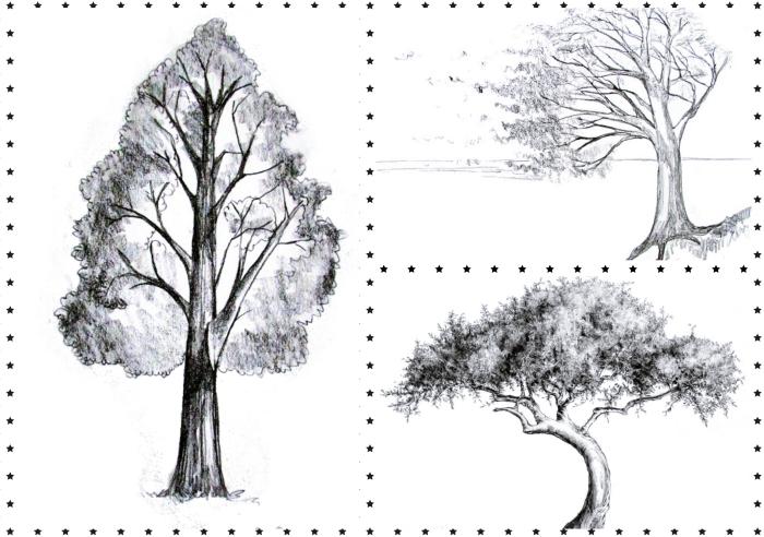 modèles de différents types d arbre à dessiner facilement, idée comment dessiner un arbre facile sans feuilles, apprendre à dessiner un arbre