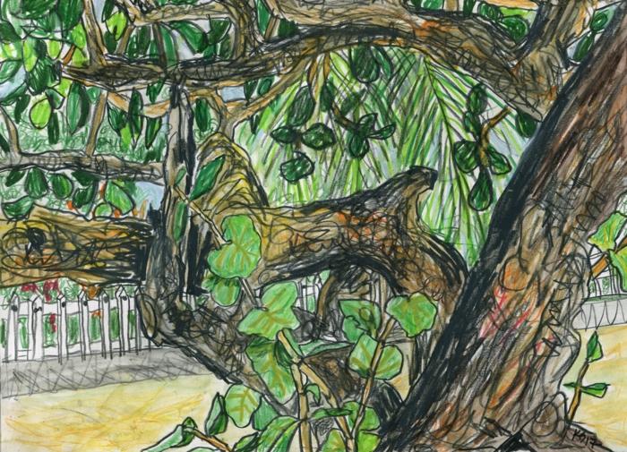 Dessiner un arbre comment dessiner des arbres technique couleur