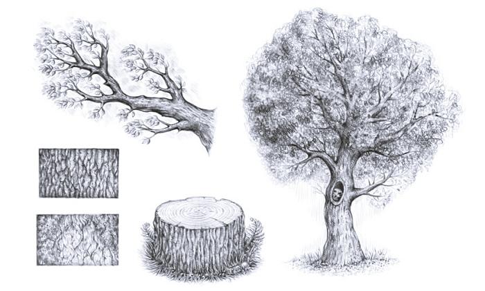 quels sont les éléments essentiels dans un dessin arbre facile, dessin arbre de printemps avec tronc et feuilles, comment dessiner un arbre facile
