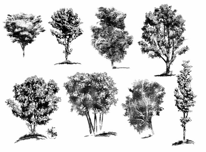 Apprendre le dessin au crayon dessiner un arbre facile